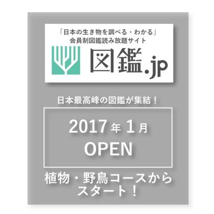 山と渓谷社「図鑑.jp」生き物図鑑の電子書籍が定額で読み放題